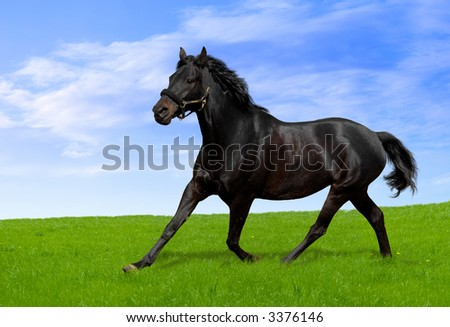 Friesian  definition of Friesian by The Free Dictionary