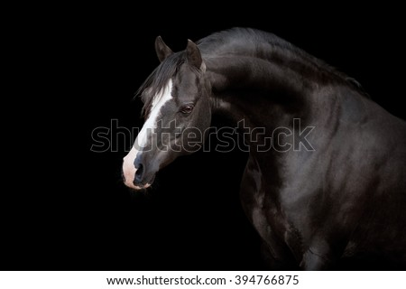 Black horse. Black horse isolated. Black horse on black background. - stock photo