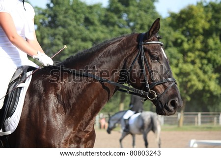 Black horse during horse show