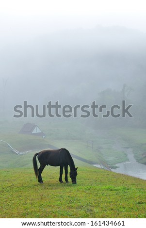 Black horse eating grass field amidst fog in morning - stock photo