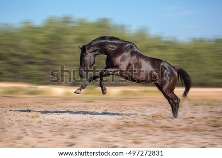 Black horse expressive jump on a forest  background on the sand