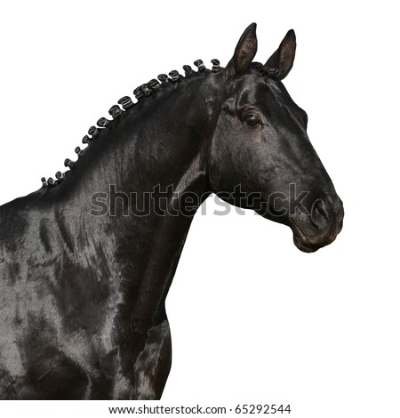 Black horse head isolated on a white background - stock photo