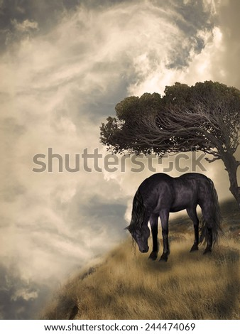Black horse in a fantasy field landscape - stock photo