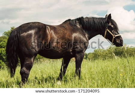 black horse in a field during the daytime - stock photo