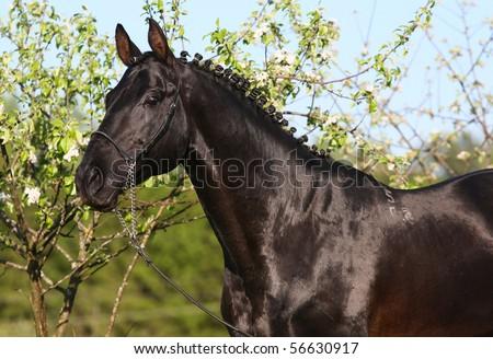 Black horse in garden - stock photo