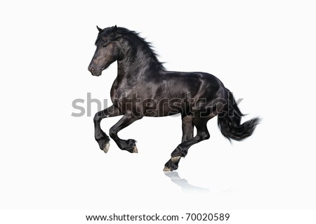 black horse isolated on white - stock photo