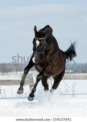 black horse jumps - stock photo