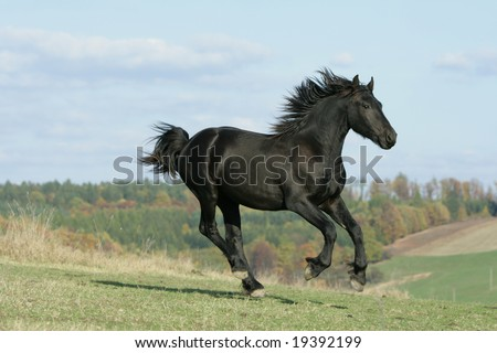 Black horse moving