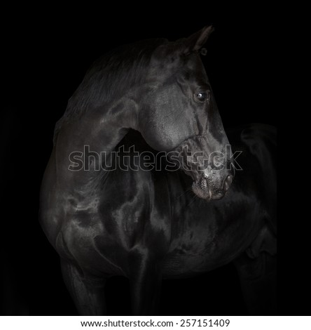 black horse on black - stock photo
