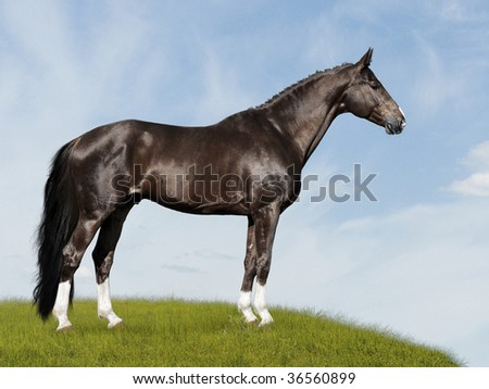 black horse on the blue and green background, on the meadow - stock photo