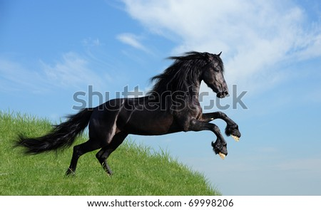 black horse playing on the field - stock photo