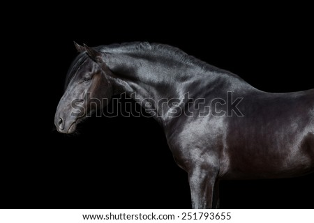 Black horse portrait isolated on black background - stock photo