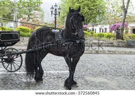 black horse pulling wagon - stock photo