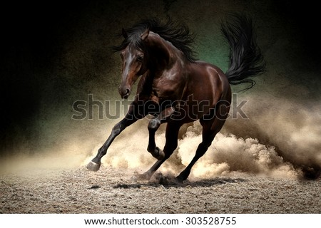 Black horse run gallop in dust desert - stock photo