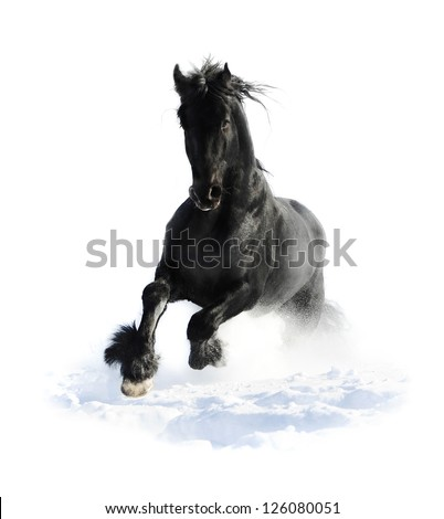 Black horse runs gallop in winter on the white - stock photo