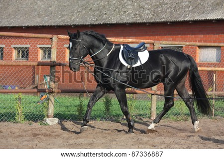 Black horse trotting near the stable fence - stock photo