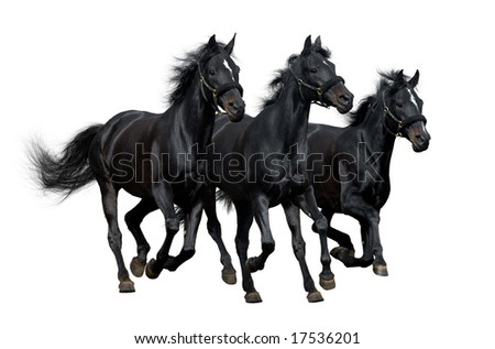 black horses isolated on white - stock photo