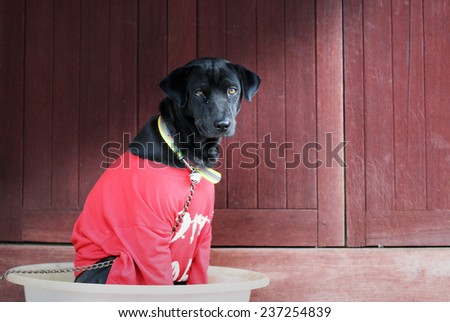 Black hybrid dog wearing red T-Shirt sitting in big bowl - stock photo