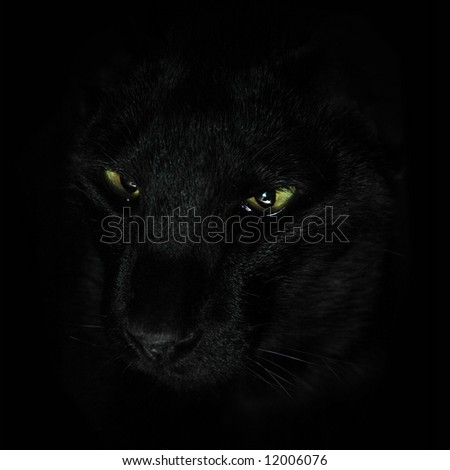 Black kat on a black background - stock photo