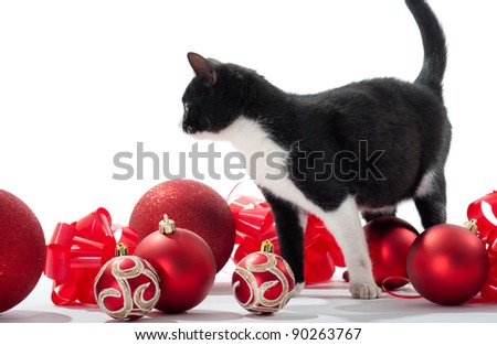 Black Kitten Christmas decorations on white background - stock photo