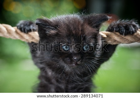 Black kitten hanging on the rope looking to the left - stock photo
