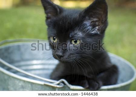 black kitten in bucket - stock photo