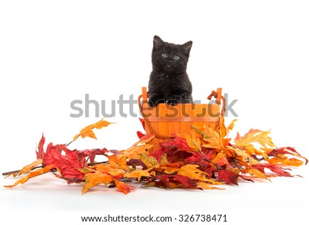 Black kitten in orange bucket with fall leaves isolated on white background - stock photo