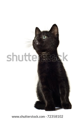 Black Kitten looking into copyspace. (Not Isolated) - stock photo