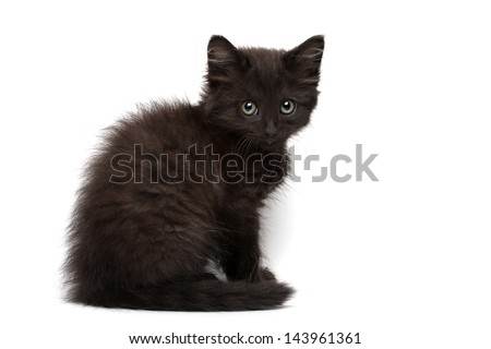 Black Kitten on a white background