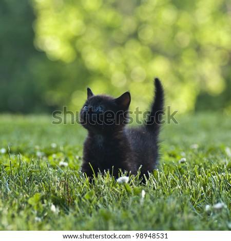 black kitten outdoors in the grass - stock photo