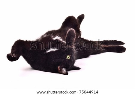Black kitten playing lying on it's back upside down isolated on white background - stock photo
