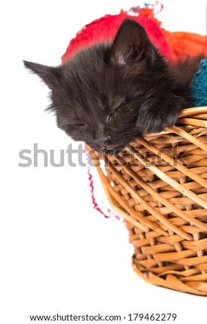 Black kitten playing with a red ball of yarn isolated on a white background