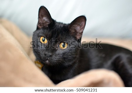 black kitten relaxing cozy on soft blanket