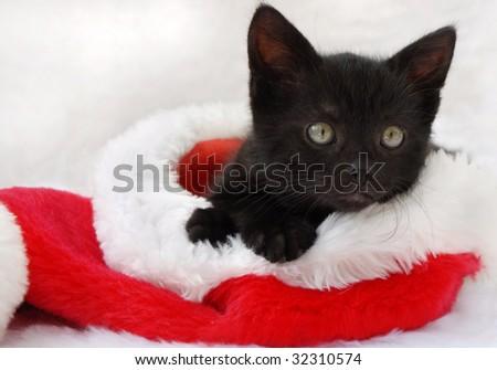black kitten relaxing in a santa hat - stock photo