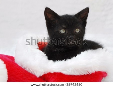 black kitten sitting in a santa hat - stock photo