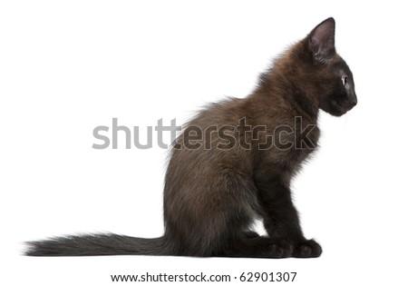 Black kitten sitting in front of white background - stock photo