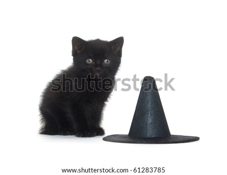 Black kitten sitting on white background with witch hat for Halloween - stock photo