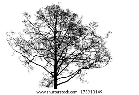 Black leafless tree photo silhouette on white background - stock photo