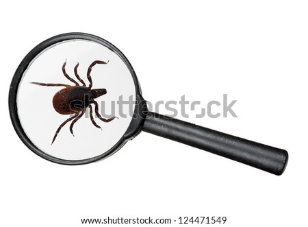 Black legged deer tick as found on cats and dogs - real magnifying glass - stock photo
