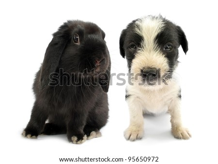 Black lop rabbit bunny and puppy are friends - stock photo