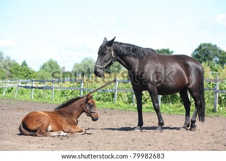 Black mare standing near her resting foal - stock photo