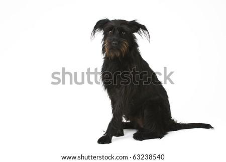 Black mixture dog on a white background. - stock photo