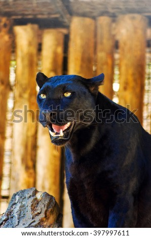 black Panther - stock photo