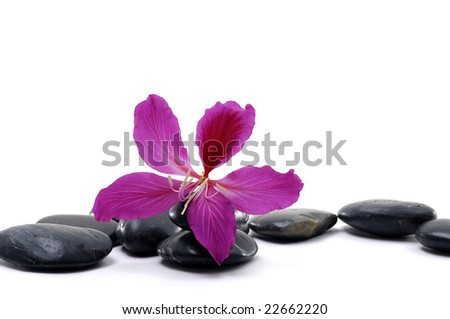black pebbles with beauty red flower isolated on white