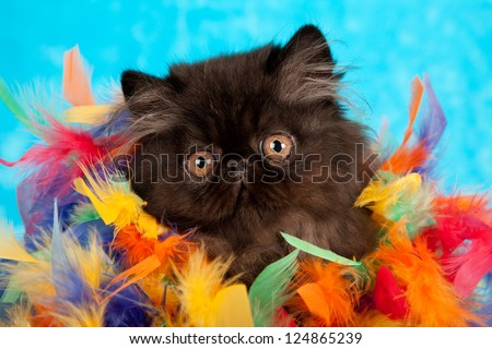 Black Persian kitten hiding in colorful feather boa on blue fake faux fur background - stock photo