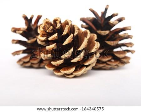 black pine cones - stock photo