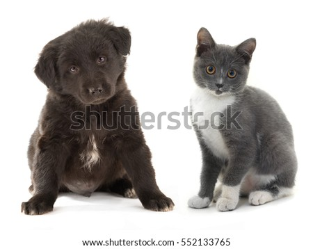 black puppy and kitten gray, isolated on a white background