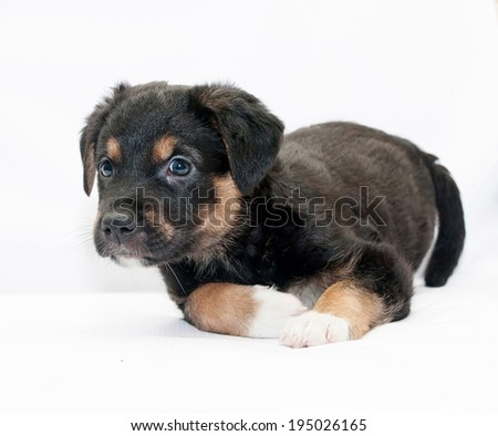 Black puppy with red spots and white legs warily looking away