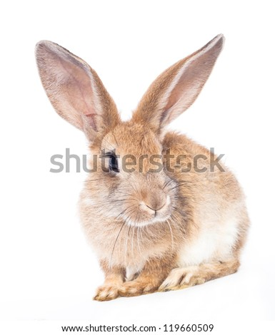 Black rabbit with bow isolated on white background - stock photo