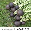 Black radish - stock photo
